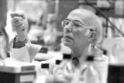 Большая потеря – умер известный вирусолог Ренато Дульбекко.
